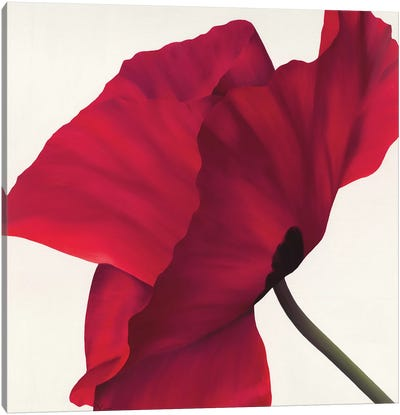 Papaver II Canvas Art Print