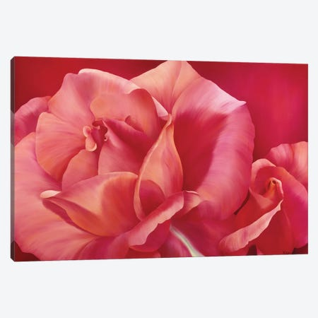 Pink Rose I Canvas Print #YPH40} by Yvonne Poelstra-Holzhaus Canvas Print