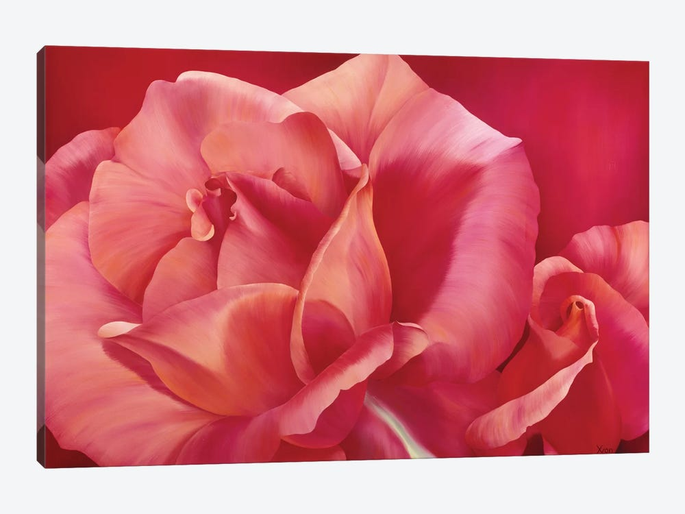 Pink Rose I by Yvonne Poelstra-Holzhaus 1-piece Art Print