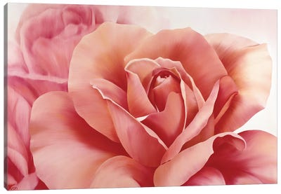 Pink Rose II Canvas Art Print