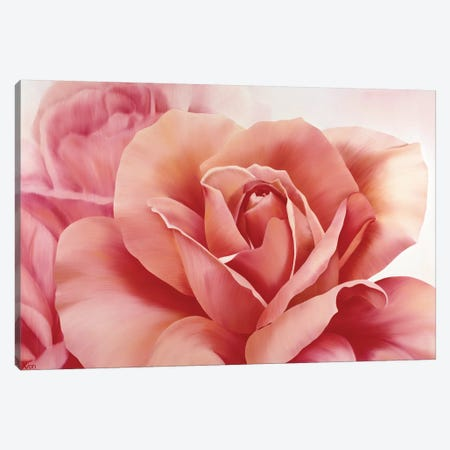 Pink Rose II 3-Piece Canvas #YPH41} by Yvonne Poelstra-Holzhaus Canvas Art Print