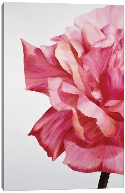 Pink Twin I Canvas Art Print