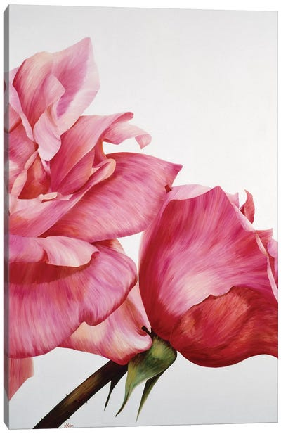 Pink Twin II Canvas Art Print