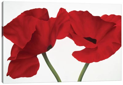 Poppy Red Canvas Art Print