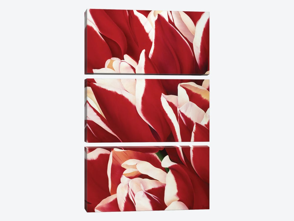 Red & White II by Yvonne Poelstra-Holzhaus 3-piece Canvas Print