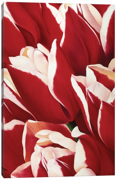 Red & White II Canvas Art Print