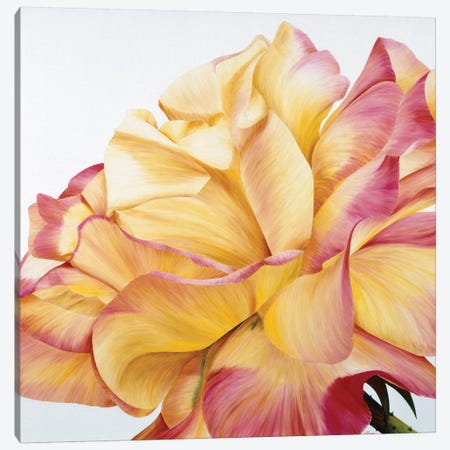 Beautiful Rose 3-Piece Canvas #YPH4} by Yvonne Poelstra-Holzhaus Canvas Art Print