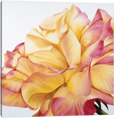 Beautiful Rose Canvas Art Print