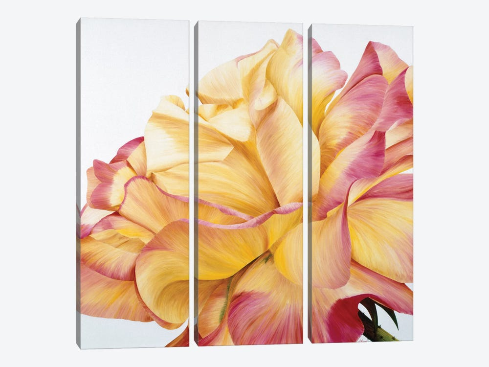 Beautiful Rose by Yvonne Poelstra-Holzhaus 3-piece Canvas Art Print