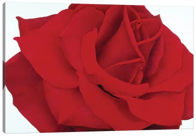 Red Rose Canvas Art Print