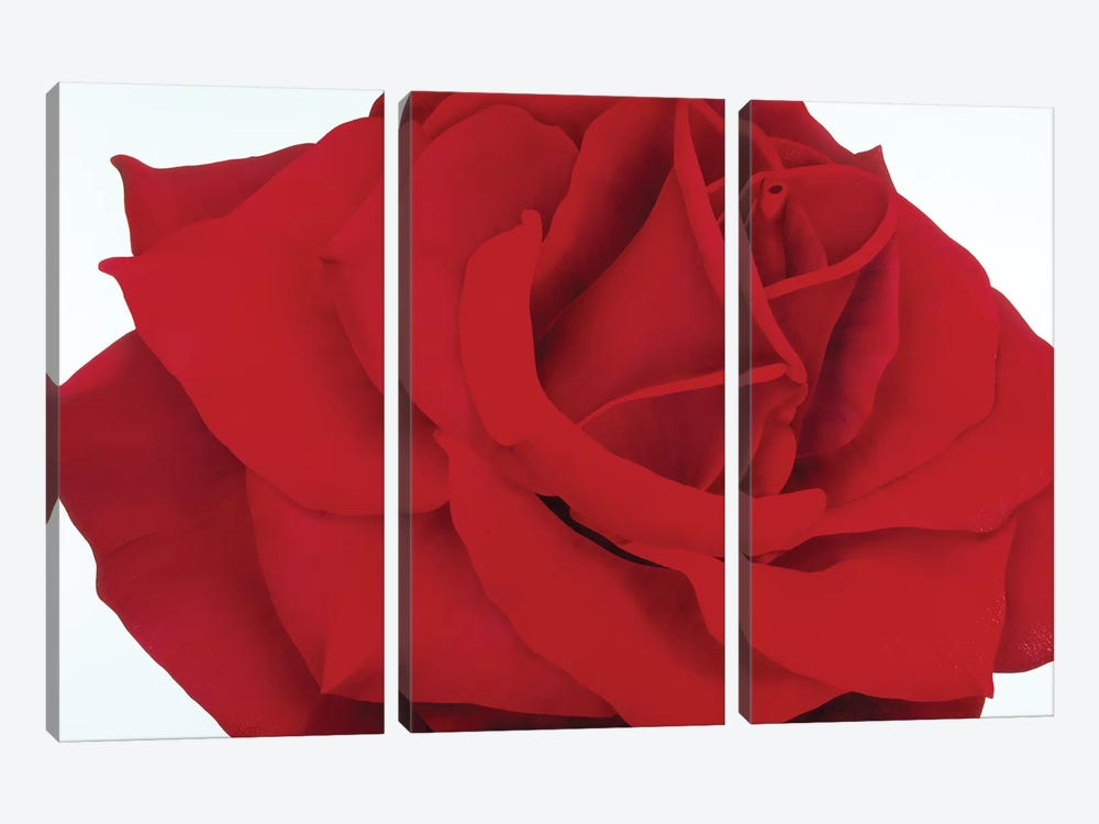 Red Rose by Yvonne Poelstra-Holzhaus 3-piece Canvas Wall Art