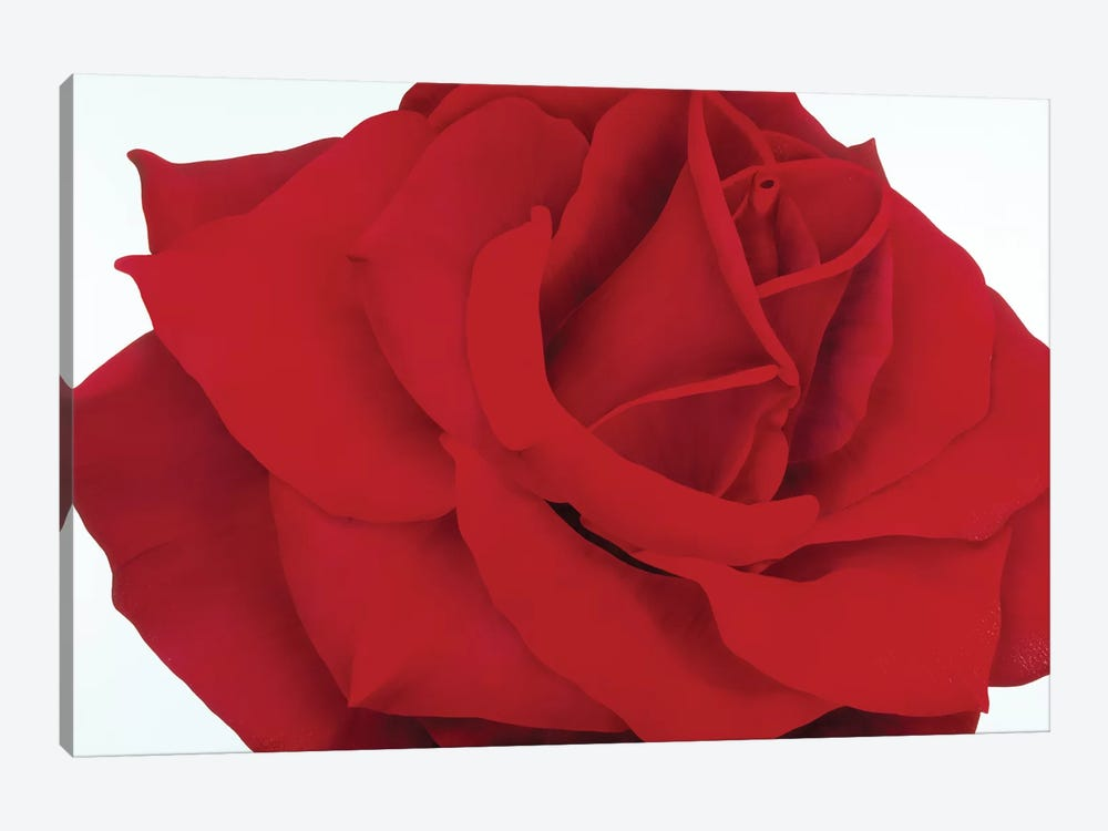 Red Rose by Yvonne Poelstra-Holzhaus 1-piece Canvas Wall Art
