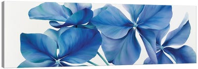 Shiny Bleu Canvas Art Print