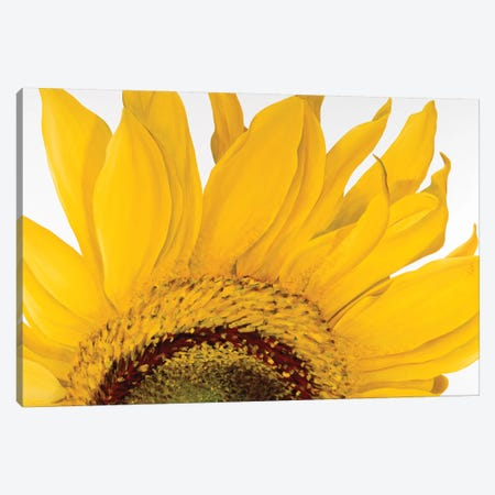 Sunflower I Canvas Print #YPH58} by Yvonne Poelstra-Holzhaus Canvas Artwork