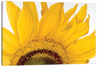 Sunflower I Canvas Art Print