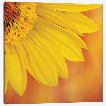 Sunflower II Canvas Print #YPH59} by Yvonne Poelstra-Holzhaus Canvas Art