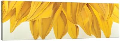 Sunny Yellow Canvas Art Print