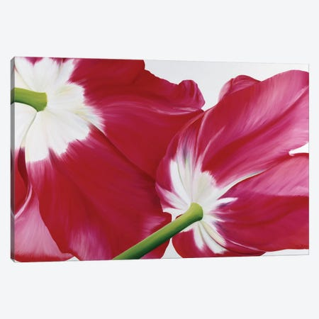 Tulipa Canvas Print #YPH63} by Yvonne Poelstra-Holzhaus Canvas Art Print