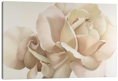 White Rose Canvas Art Print