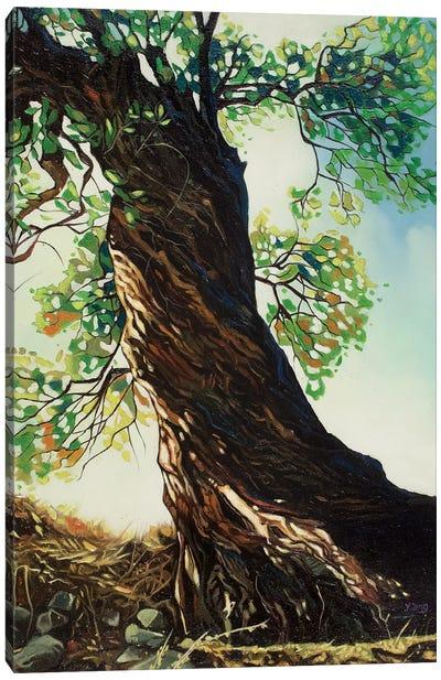 Big Tree Canvas Art Print