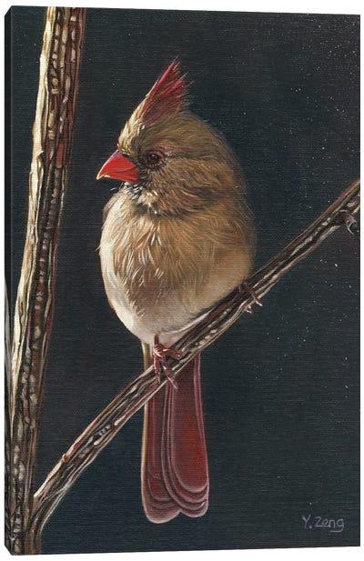 Female Cardinal Bird Canvas Art Print