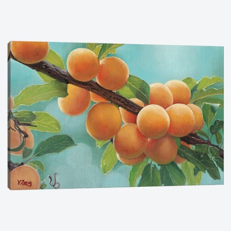 Apricots Canvas Print #YZG2} by Yue Zeng Art Print