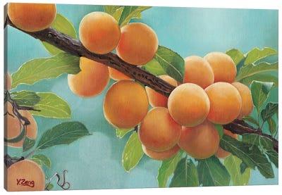 Apricots Canvas Art Print