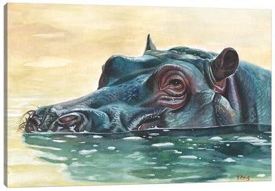 Hippo Canvas Art Print