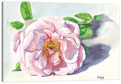 Single Pink Rose Canvas Art Print