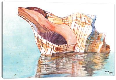 Seashell Canvas Art Print