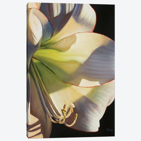 Picotee Flower Canvas Print #YZG41} by Yue Zeng Canvas Art