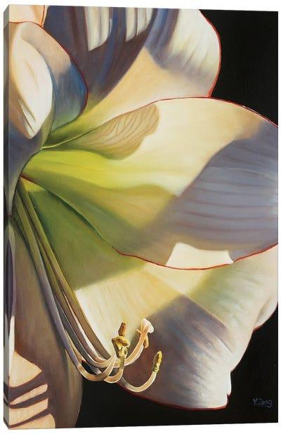 Picotee Flower Canvas Art Print