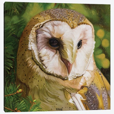 Barn Owl Canvas Print #YZG45} by Yue Zeng Canvas Print