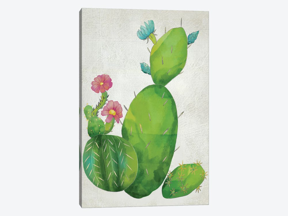 Cacti Collection I by Chariklia Zarris 1-piece Canvas Print