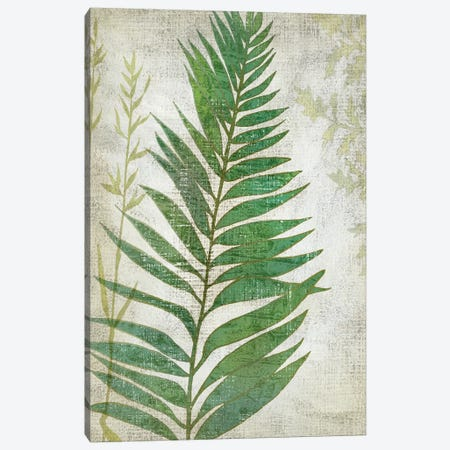 Frond I Canvas Print #ZAR188} by Chariklia Zarris Canvas Print