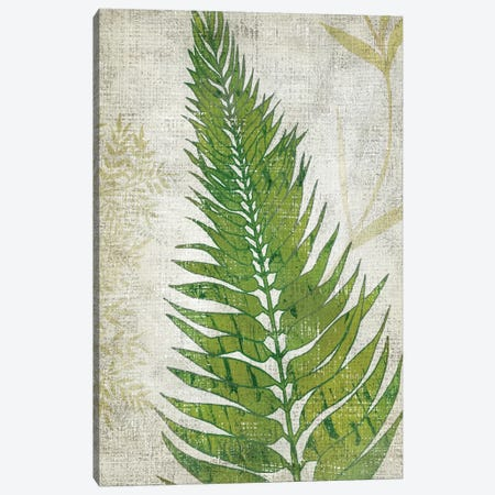Frond II Canvas Print #ZAR189} by Chariklia Zarris Canvas Print
