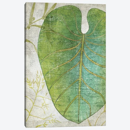 Frond IV Canvas Print #ZAR191} by Chariklia Zarris Canvas Art