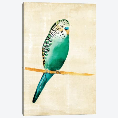 Fanciful Birds II Canvas Print #ZAR24} by Chariklia Zarris Canvas Wall Art