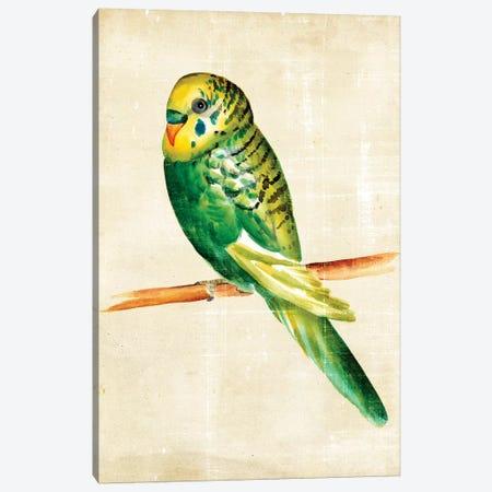 Fanciful Birds III Canvas Print #ZAR25} by Chariklia Zarris Canvas Art