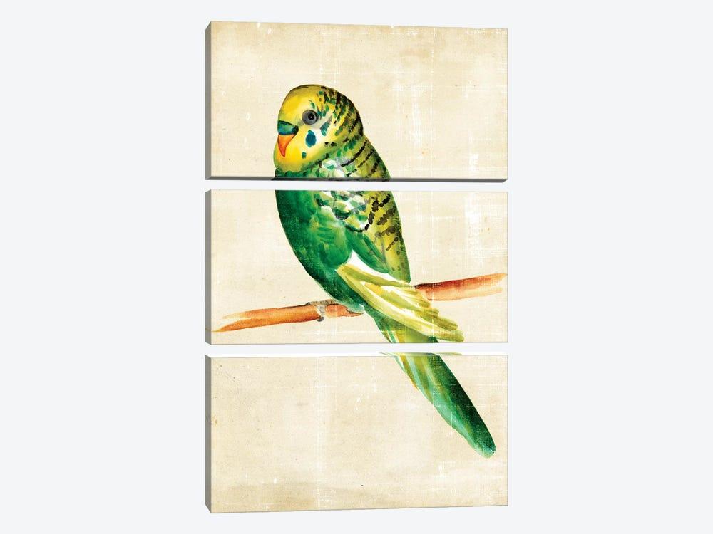 Fanciful Birds III by Chariklia Zarris 3-piece Canvas Print