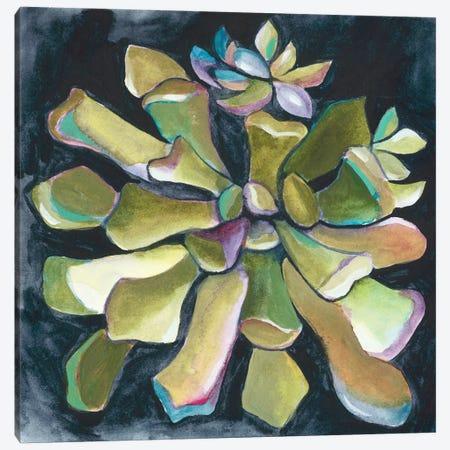 Succulent Rosette I Canvas Print #ZAR330} by Chariklia Zarris Canvas Art