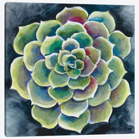 Succulent Rosette II Canvas Print #ZAR331} by Chariklia Zarris Canvas Artwork