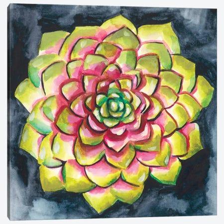 Succulent Rosette III Canvas Print #ZAR332} by Chariklia Zarris Canvas Art
