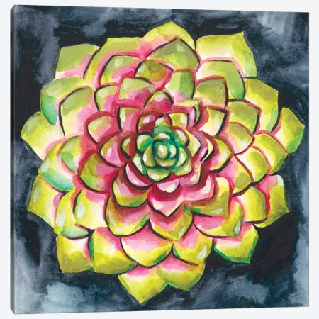 Succulent Rosette III Canvas Print #ZAR332} by Chariklia Zarris Canvas Art