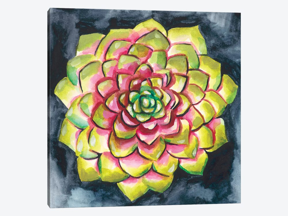 Succulent Rosette III by Chariklia Zarris 1-piece Canvas Print