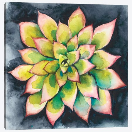 Succulent Rosette IV Canvas Print #ZAR333} by Chariklia Zarris Canvas Art