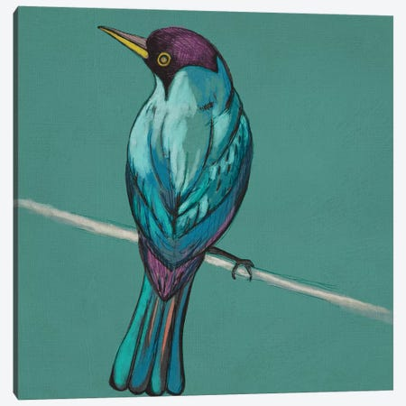Winged Sketch I On Teal Canvas Print #ZAR439} by Chariklia Zarris Art Print