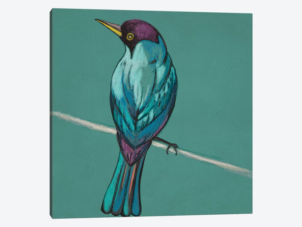 Winged Sketch I On Teal by Chariklia Zarris 1-piece Canvas Art Print