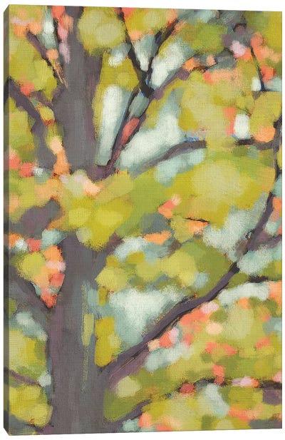Dappled Dusk II Canvas Art Print
