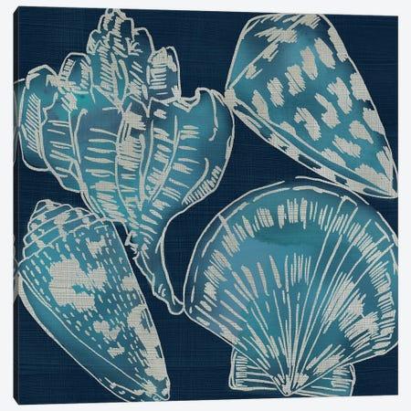 Marine Shells II Canvas Print #ZAR715} by Chariklia Zarris Art Print